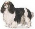 caini/Avatare_Caini_English_Toy_Spaniel.jpg