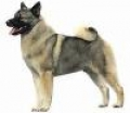 caini/Avatare_Norwegian_Elkhound.jpg